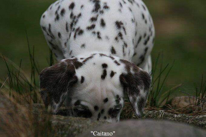 Caitano